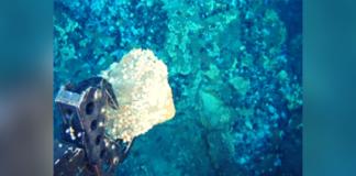 anti-deep sea mining
