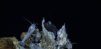biodiversity loss transparent environmetal management