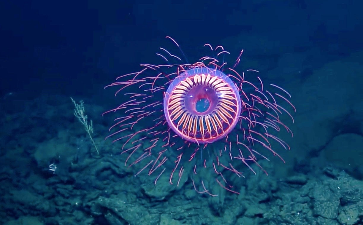 How Scientists Use Bioluminescent Deep-Sea Creatures to Fight Cancer