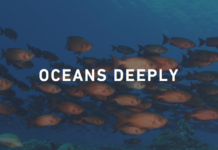 Community Fellow - Oceans Deeply (Spring Semester)
