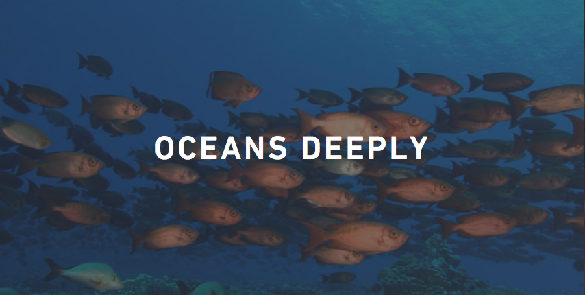 Community Fellow - Oceans Deeply (Spring Semester)