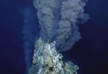 Deep-sea fish use hydrothermal vents to incubate eggs deep sea ecosystems