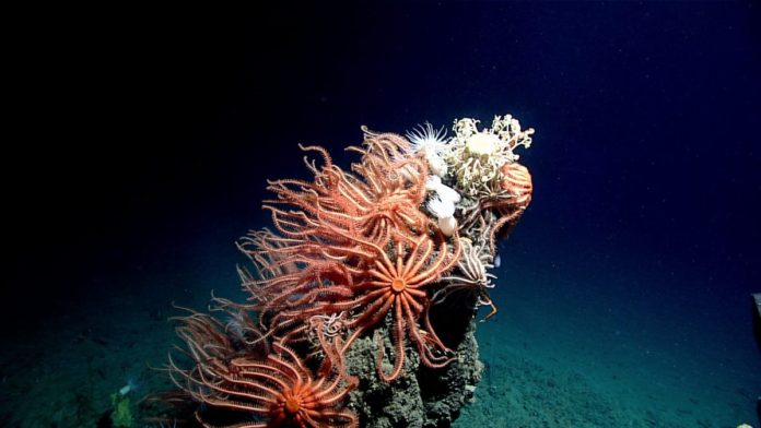 Scientists spent a month exploring the Gulf of Mexico's deep sea habitats — and the images they brought back are astonishing