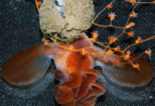 Rare find from the deep sea New Studies Highlight Complexity of Deep Sea Ecosystems