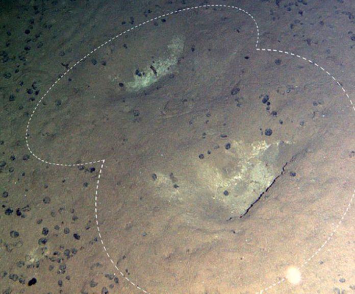 Beaked whale gouges on the deep seafloor. Photo from Marsh et al. 2018.