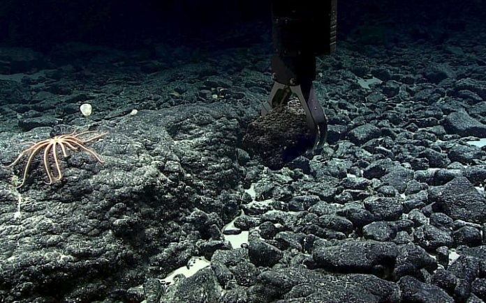 A manganese-crusted rock sample being grabbed from the Te Tukunga o Fakahotu dive site, just north of the Manihiki Plateau, near the Cook Islands. Photo: NOAA Office of Ocean Exploration and Research, Mountains in the Deep: Exploring the Central Pacific Basin.
