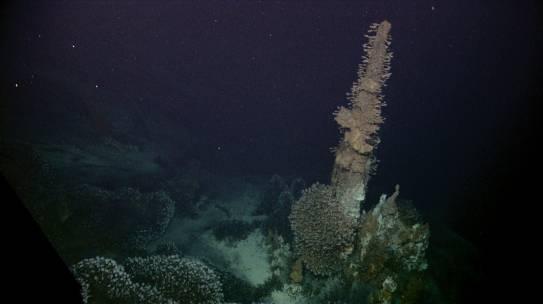 A Primer on Seafloor Massive Sulphides