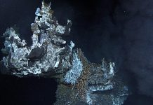 Venting fumeroles just from the crown of Godzilla hydrothermal vent. Ocean Networks Canada.