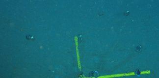 A snail relocation experiment near Solwara I. Photo courtesy Nautilus Minerals.