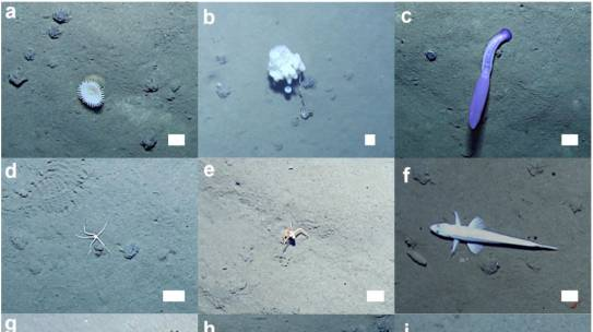 26 years after experimental mining, a seabed ecosystem has yet to recover