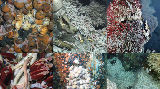 What we've missed in the Abyss: Mining 40 years of cruise reports for biodiversity and research effort data from deep-sea hydrothermal vents.