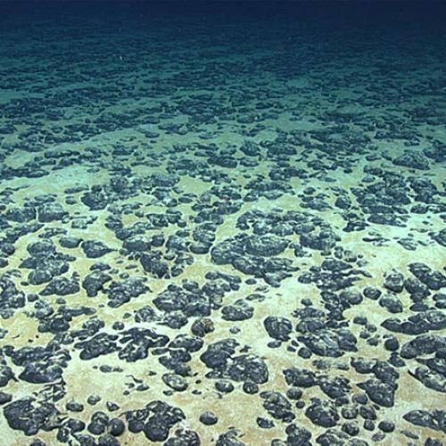 Ocean stakeholders discuss calls for moratorium on deep-sea mining.