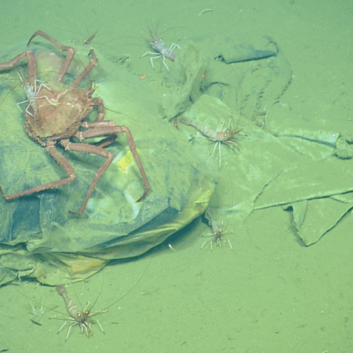 Plastic is reshaping ecosystems in the deep sea